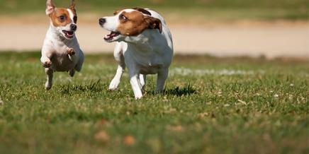 West Michigan Dog Parks